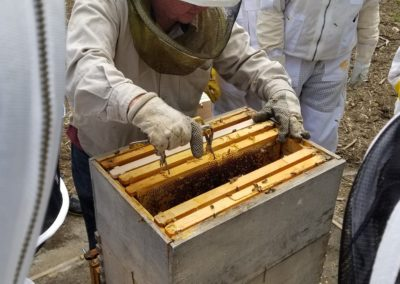 Worker Bee Kentucky Louisville adopt a hive