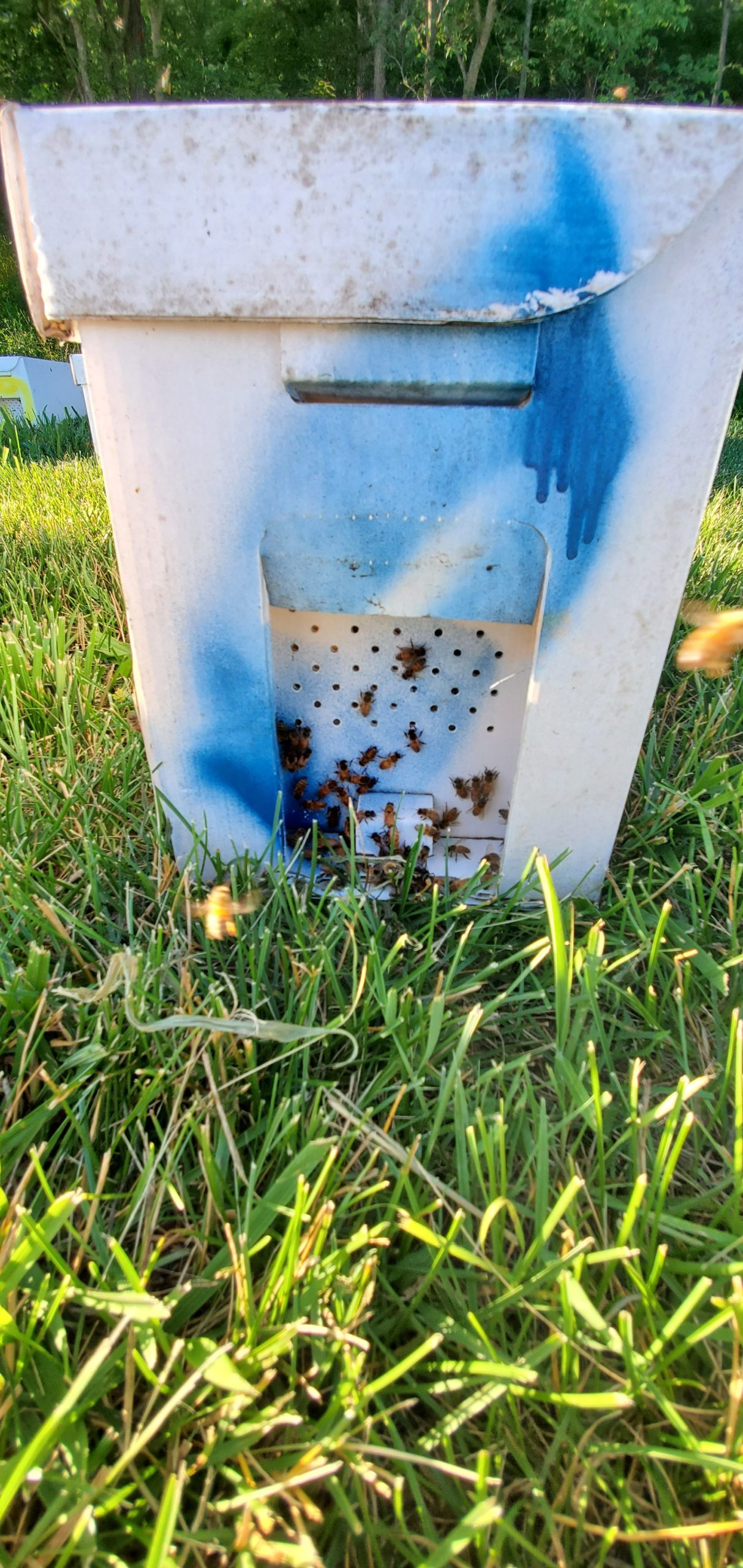 Bees for Sale, Package Bees for Sale, and Beekeeping Supplies in Kentucky